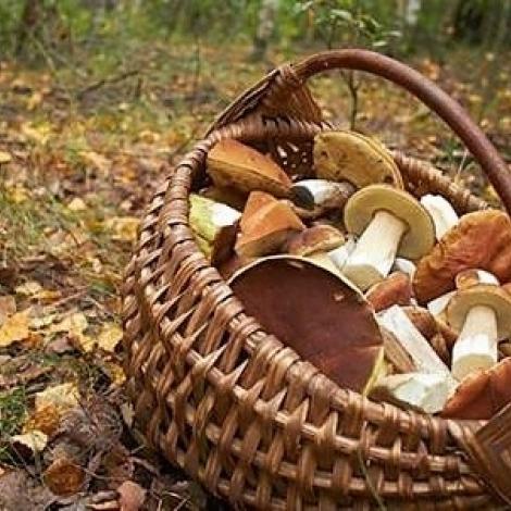 C'est la saison des champignons...